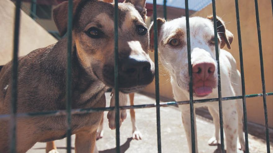 Seis Mil Animales En La Calle Cada Año El Día