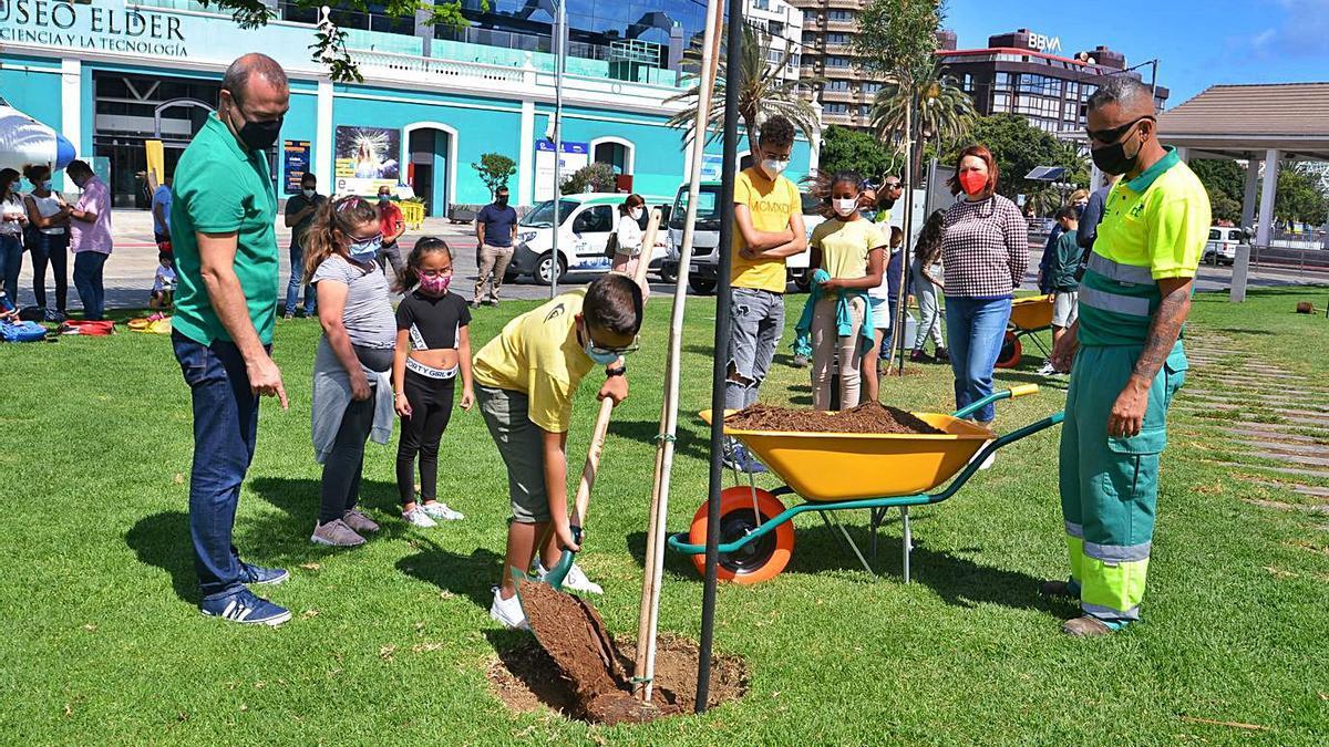 El alcalde Augusto Hidalgo, ayer, con un grupo de niños, plantando un ejemplar de Callistemun | | LP/DLP