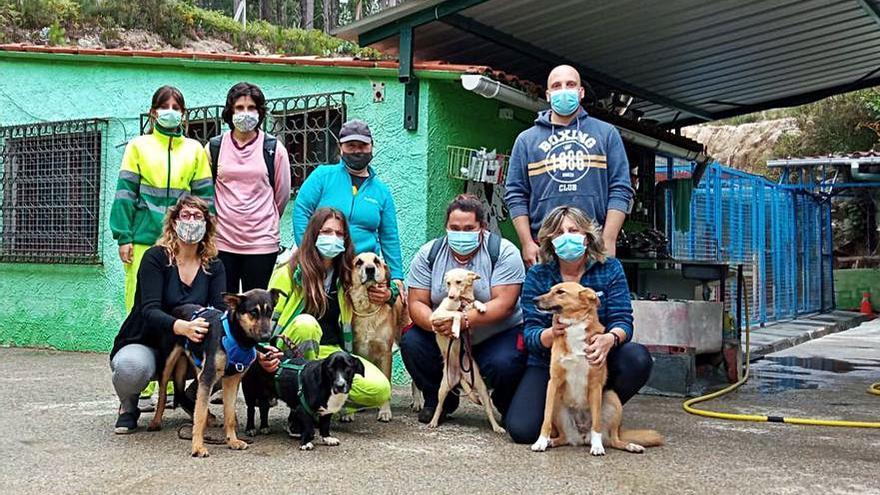 Cambados crea un servicio de lacería para animales heridos y gatos callejeros