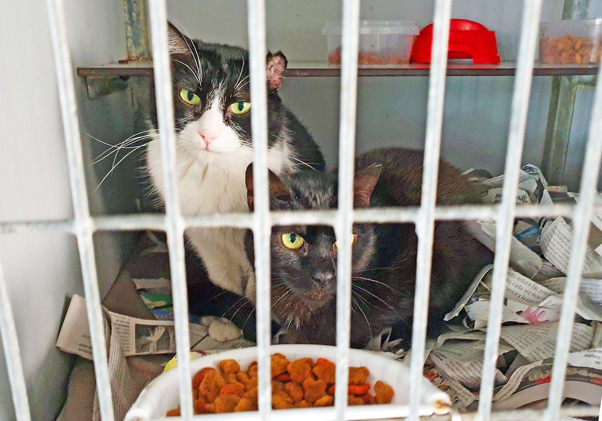 Gondomar protege a sus 70 gatos callejeros