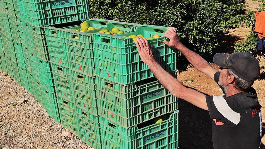 Una cuarta parte del suelo agrícola de Oliva está abandonado por falta de rentabilidad