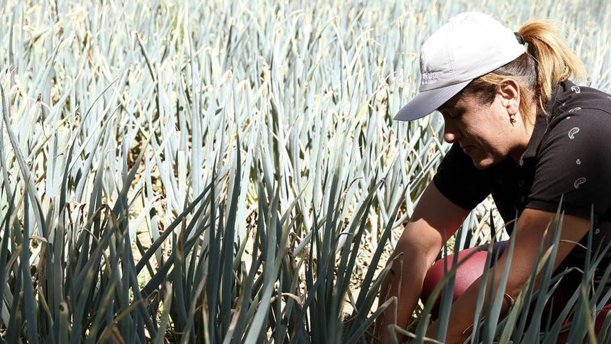 Convocadas ayudas para prolongar los créditos por la sequía de 2017