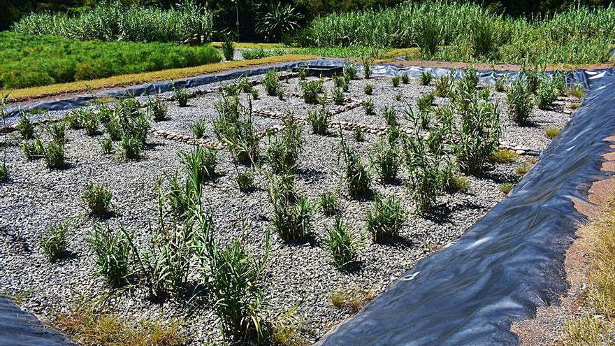 Cerdedo-Cotobade inicia el saneamiento de Paraños a través de un humedal artificial de alta eficiencia