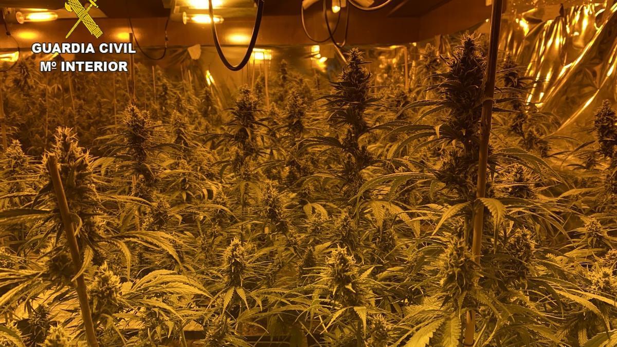 Una plantación de marihuana descubierta por la Guardia Civil en una vivienda.