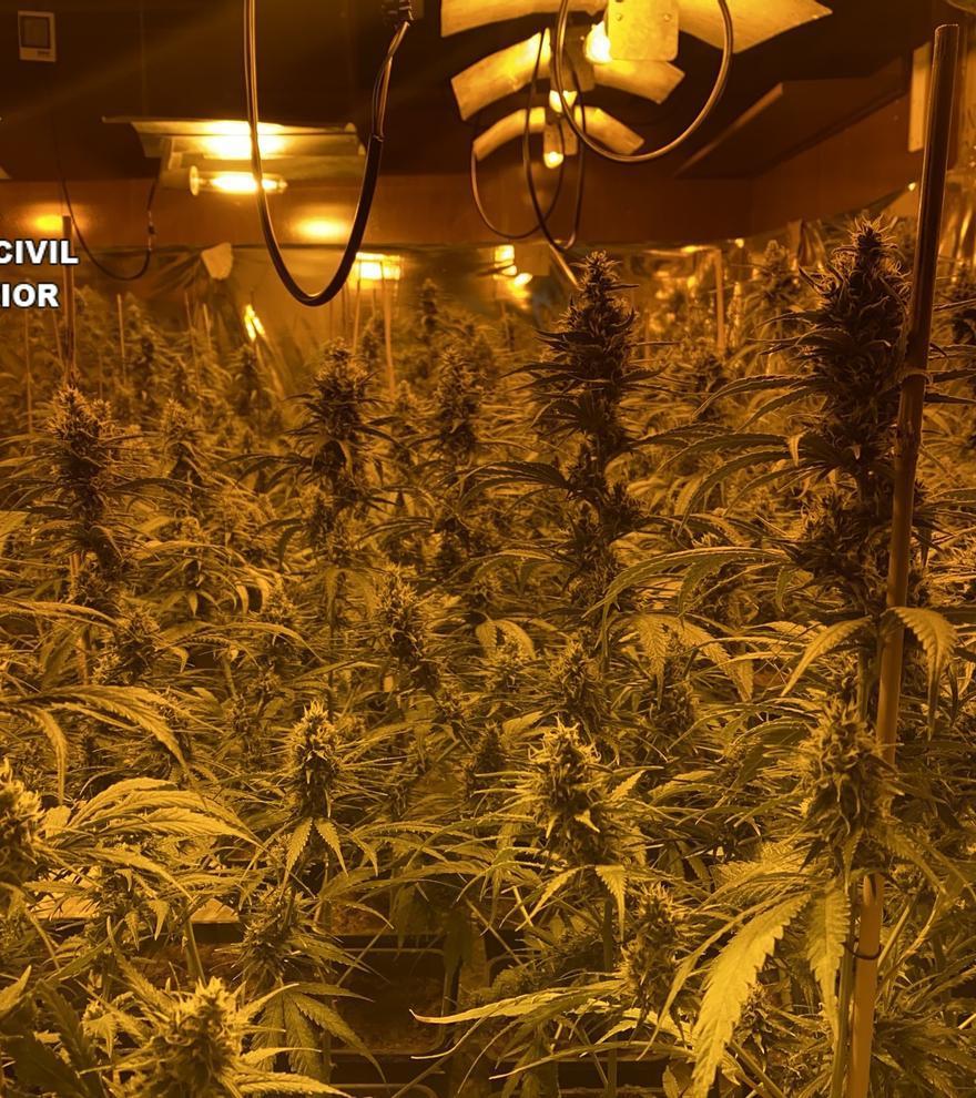 Unidas Podemos anuncia una ley para despenalizar el uso del cannabis