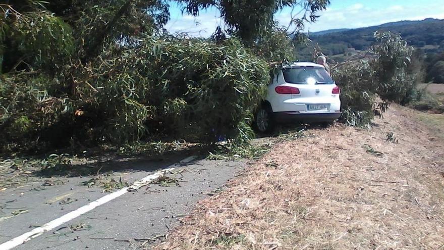 Una rama de gran tamaño cae sobre un vehículo en Soutolongo cuyos ocupantes resultaron ilesos