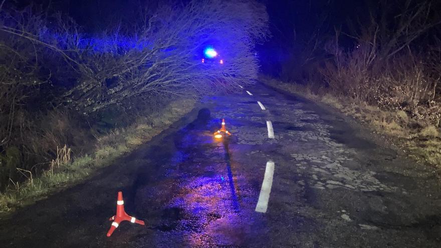 Un árbol caído dificulta la circulación en la carretera de Cobreros