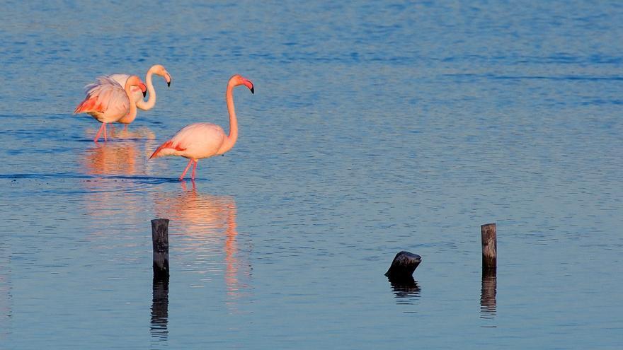 La Región quiere hacer bandera del avistamiento de aves para fomentar el turismo