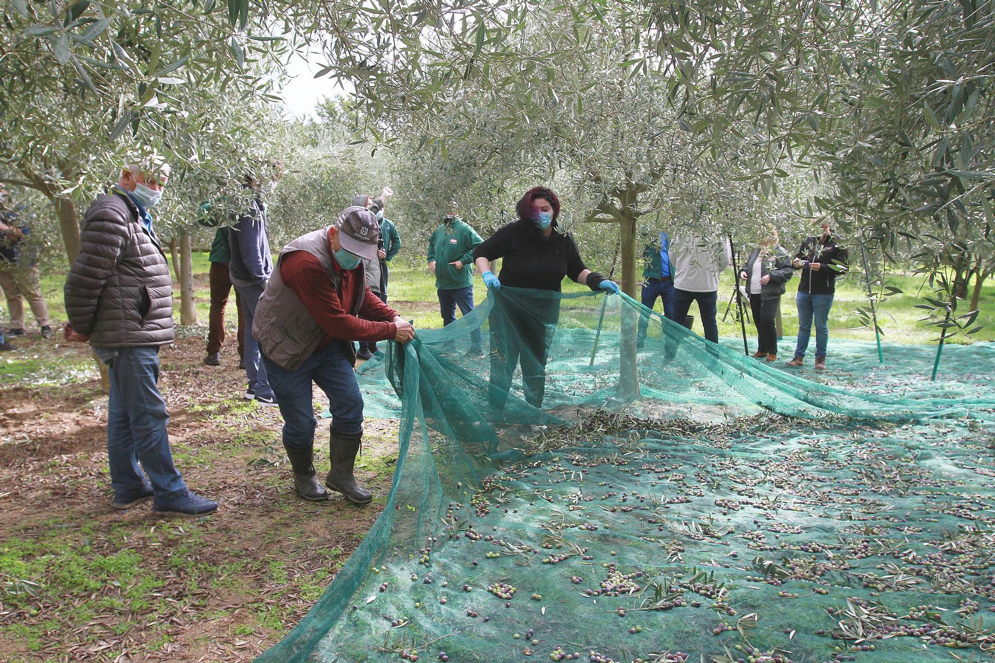 Luis Zahera, invitado junto a otros rostros populares a varear olivares en Toén