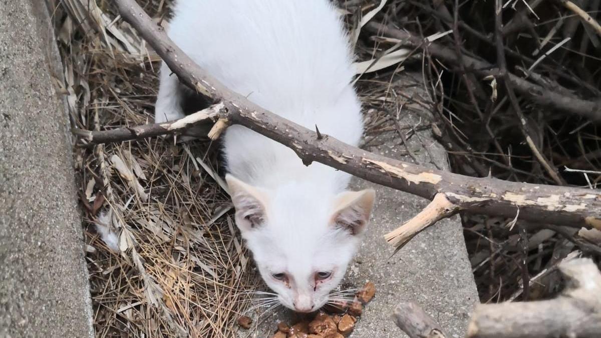 La gata, recollida dijous passat, es troba en observació a causa d'un virus