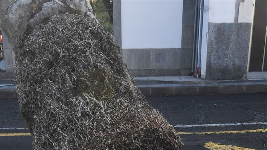 Una palmera se estrella contra un edificio en la Alameda de Colón