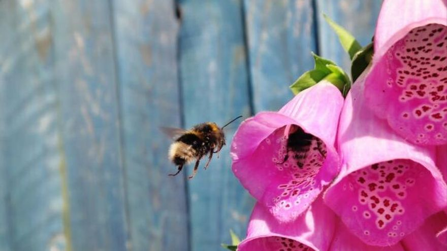 Las abejas tienen sentidos secretos para detectar comida