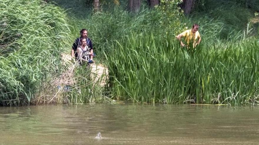 Crecen las dudas sobre el cocodrilo buscado entre el Duero y el Pisuerga