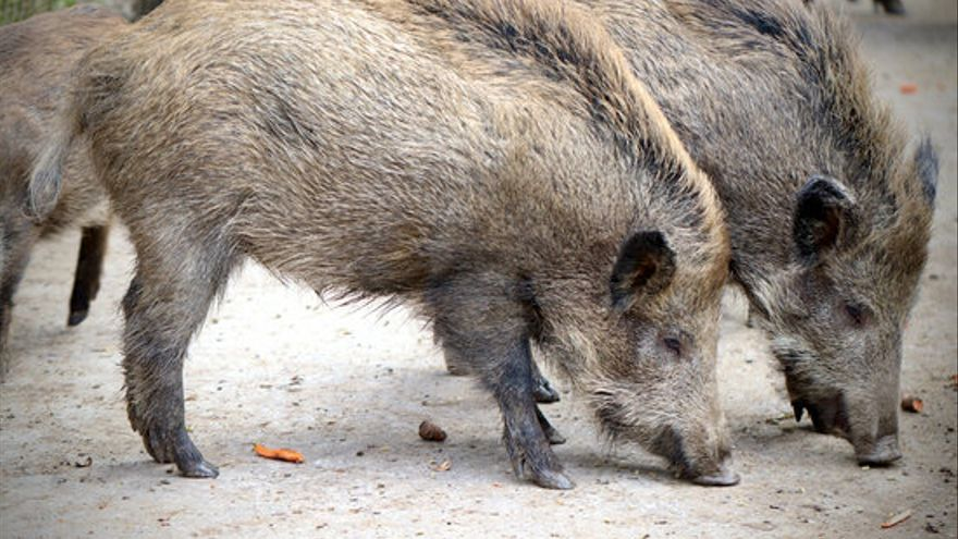 La JARC presentarà un recurs d'alçada contra l'Ajuntament de Vilabertran per la prohibició de caça