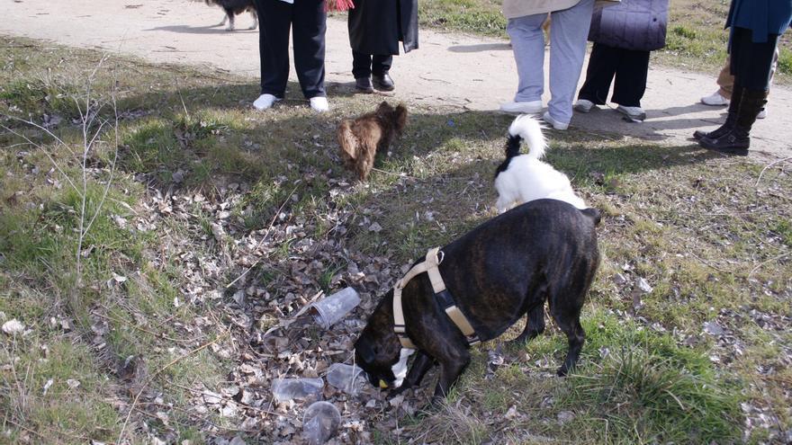 """Cruz Lucas exige la retirada de la tasa a los perros ante un servicio """"lamentable"""""""