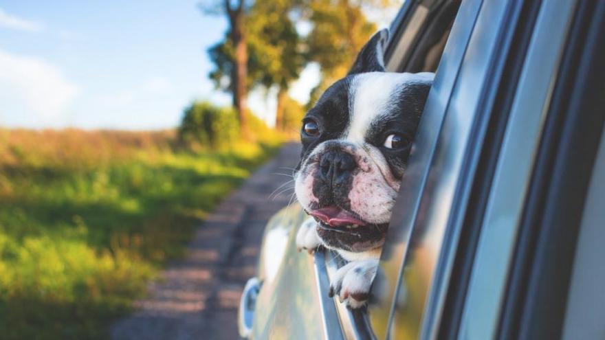 10 consejos para viajar en coche con mascotas