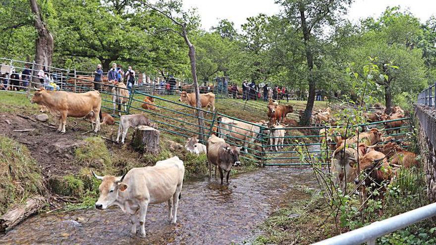 Un total de 9.285 ganaderos asturianos solicitan fondos europeos de la PAC