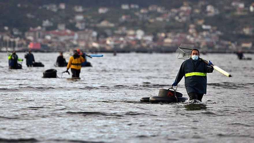 Lourizán aspira a recuperar la mitad de su banco marisquero catalogado como zona C