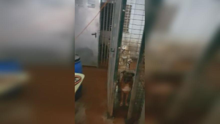 Rescatan a 10 perros en València que estaban hacinados entre excrementos