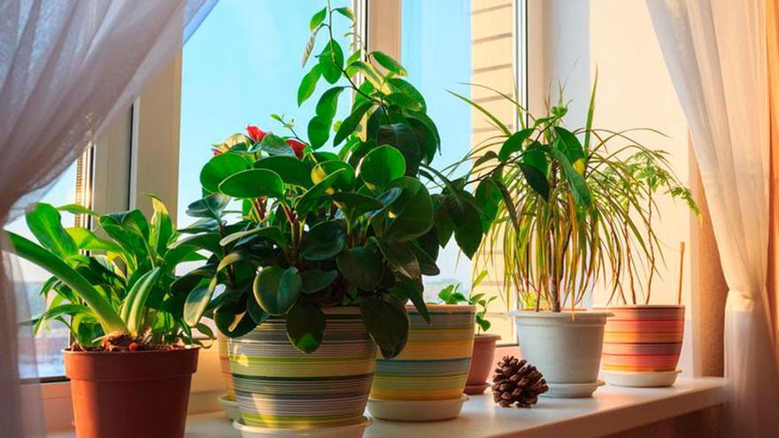 Las plantas que más tiempo duran sin que las tengas que regar