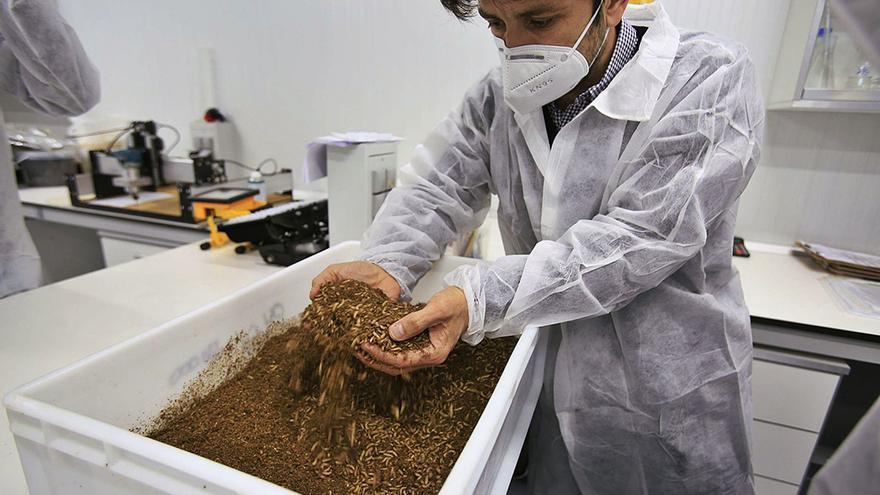 Millones de larvas de mosca para 'reciclar' los desperdicios y crear abono
