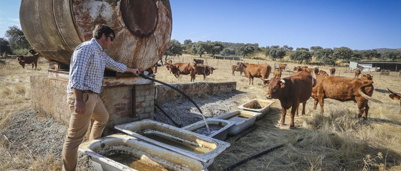 La falta de lluvias lleva al límite a los ganaderos