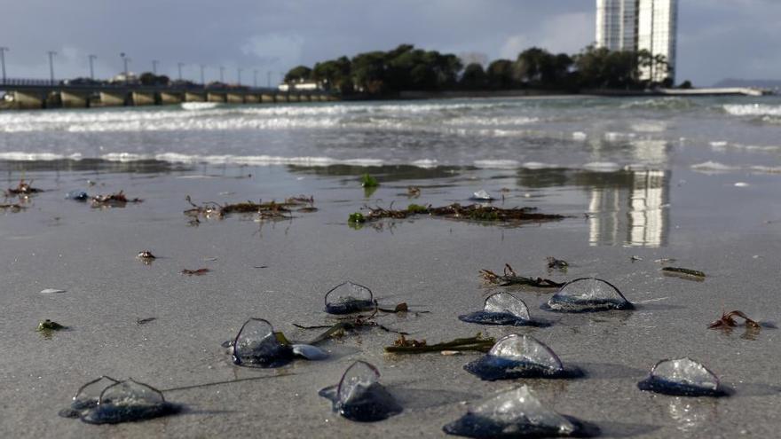 Las falsas medusas desembarcan en O Vao