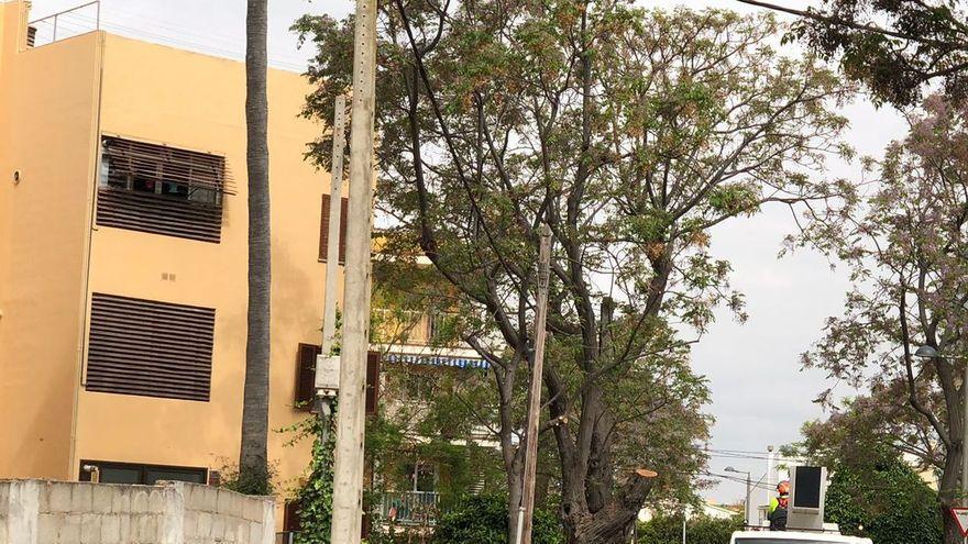 La calle Anfós de Can Pastilla se queda sin sus árboles