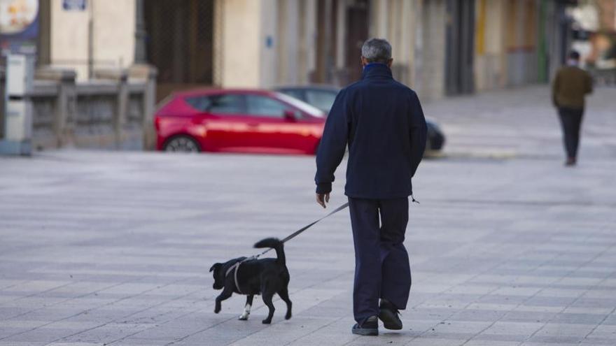 La Fiscalía vigila la adopción de perros solo para poder salir a pasear