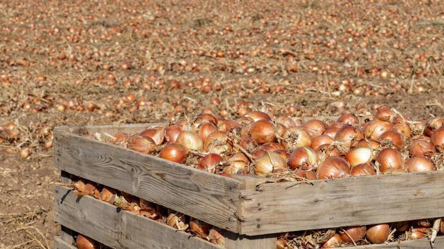 Mercadona compra un 6 % más de cebollas españolas, pero no evita las protestas de AVA y la Unió