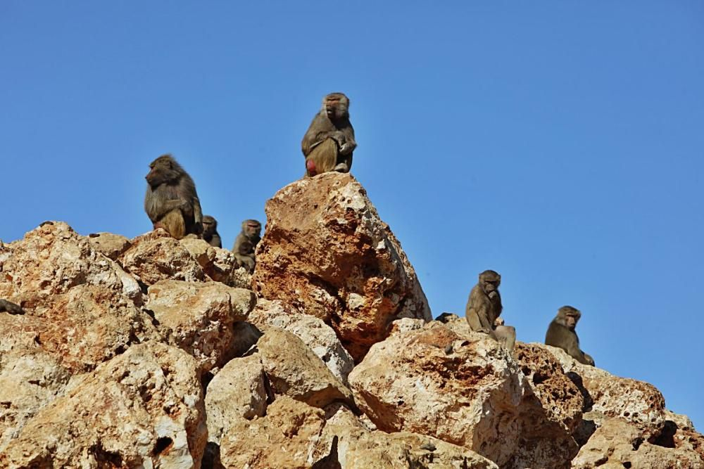 Im Safari Zoo Sa Coma gibt es in diesem Jahr besonders viel Nachwuchs.