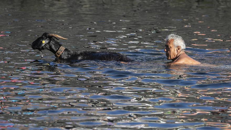 Baño de las cabras en Puerto de la Cruz