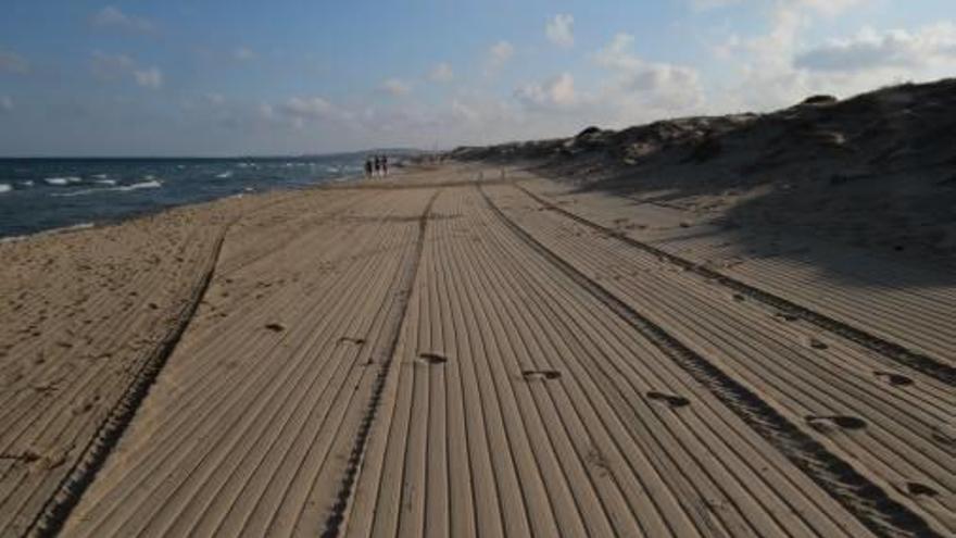 AHSA pide que se limite la limpieza mecánica en las playas por su impacto en especies protegidas