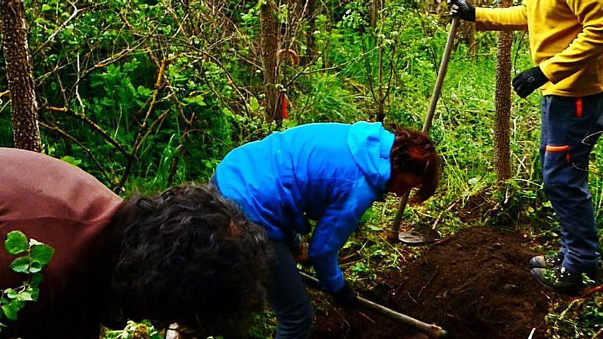 Voluntarios habilitan charcas para anfibios en Sanabria