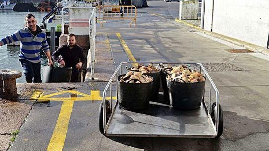 La toxina impide a los mariscadores de la ría de Ferrol extraer vieira durante un año