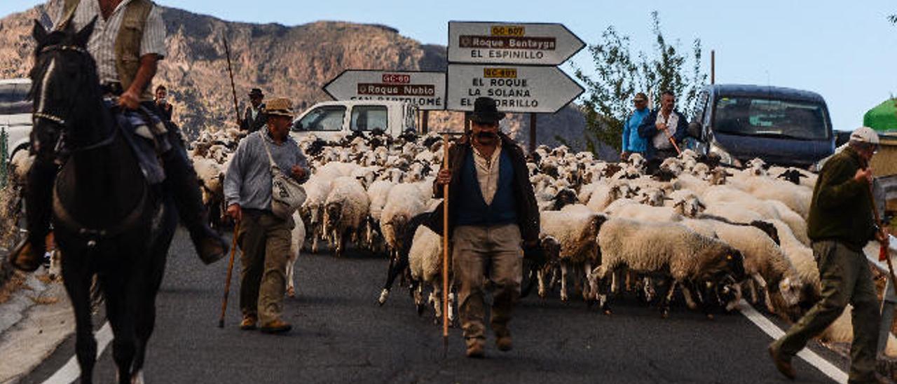Jinetes y pastores se unen a la marcha para trasladar los animales en busca de nuevos pastos.