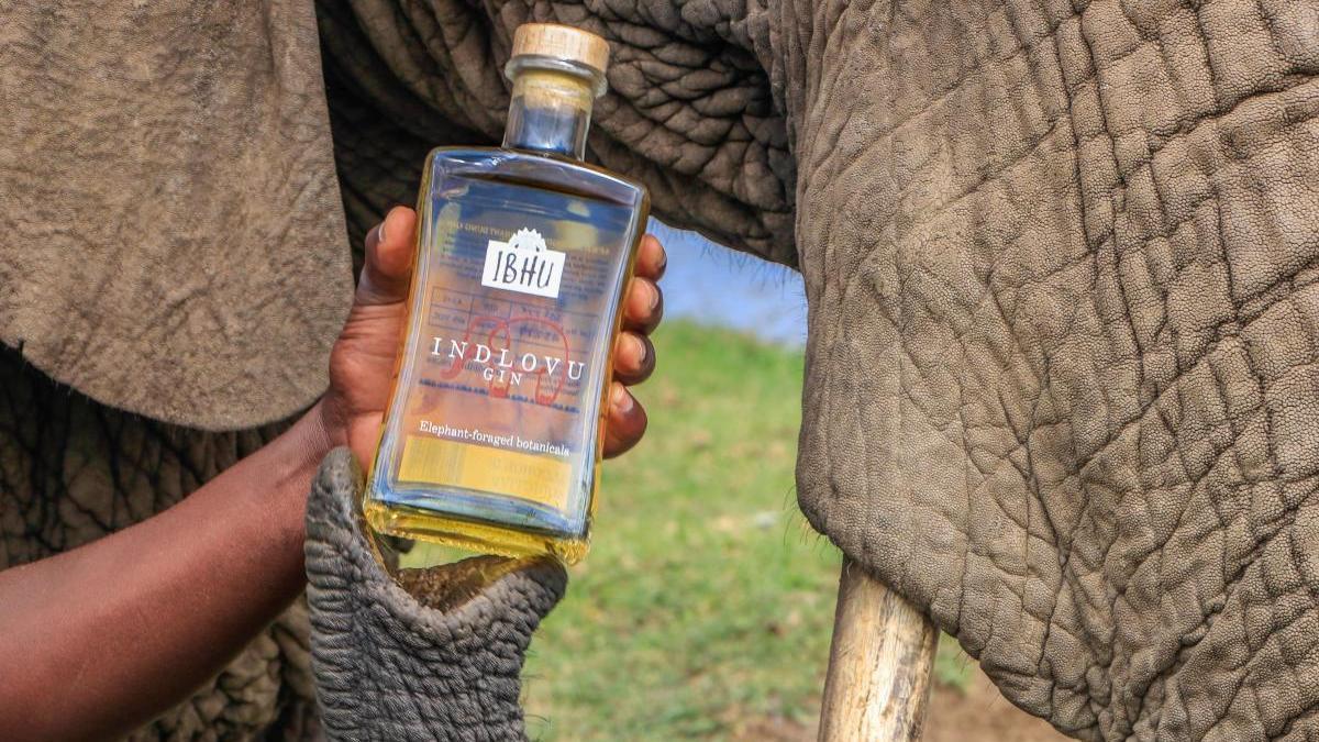 """""""Indlovu Gin"""", un término que significa """"elefante""""."""