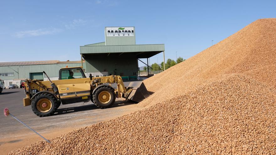 Frutos del Mañán llega a 35.000 toneladas de almendra y facturará 60 millones