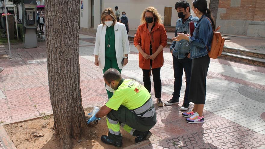 Benicàssim protegeix 400 arbres contra les plagues de primavera