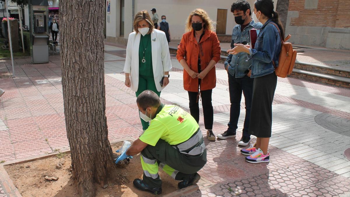 L'alcaldessa, Susana Marqués, i la regidora, Elena Llobell, contemplant l'aplicació del tractament en els arbres.