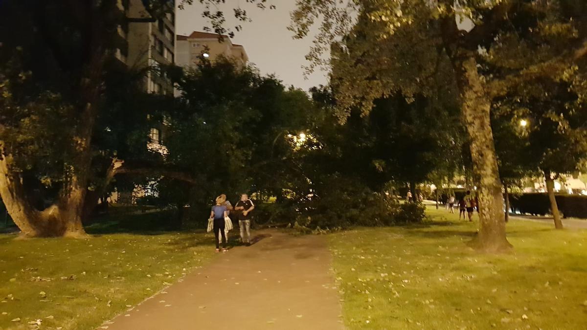Imagen del árbol caído en la avenida de Castelao
