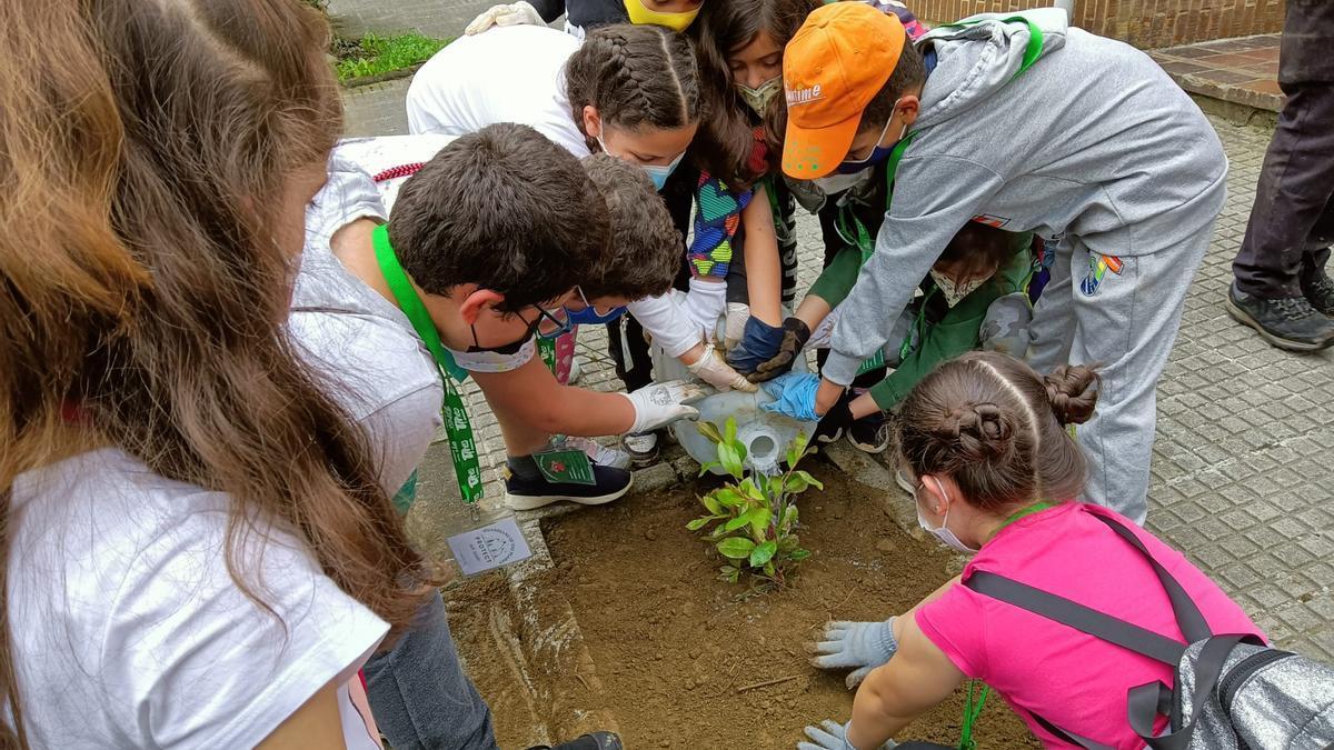 Alumnos del Verdeamor plantando un árbol
