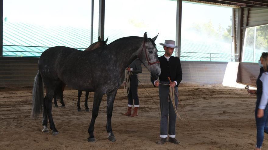 Bautista también compite en el 'Masters' de los caballos más bellos de España
