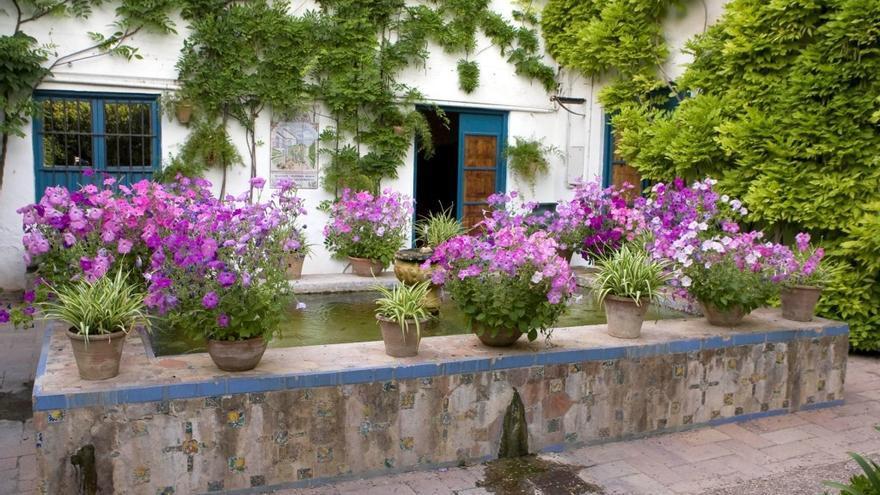 Comienza la inscripción para el concurso de pintura rápida 'Córdoba y sus patios 2021'