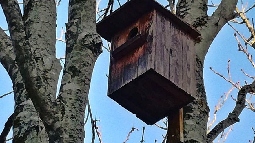 Palafrugell instal·la 24 caixes niu per a aus i ratpenats