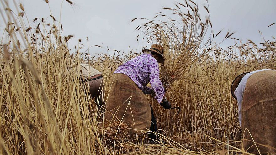 El mayor productor de cereales promociona este cultivo ancestral