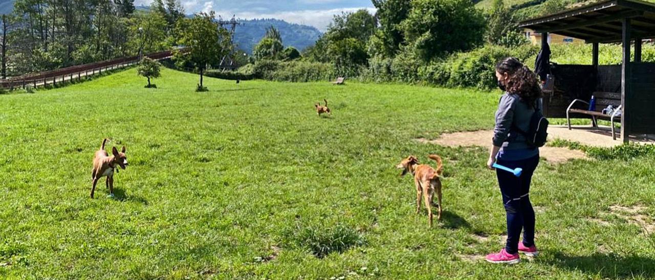 Una usuaria atiende a su perros en el área canina de la zona del paseo fluvial de Mieres, en la mañana de ayer. | J. R. S.