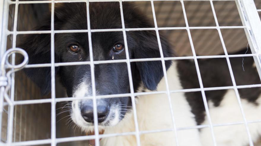 Dos investigados en Casabermeja por abandonar a dos de sus perros llenos de pulgas y garrapatas