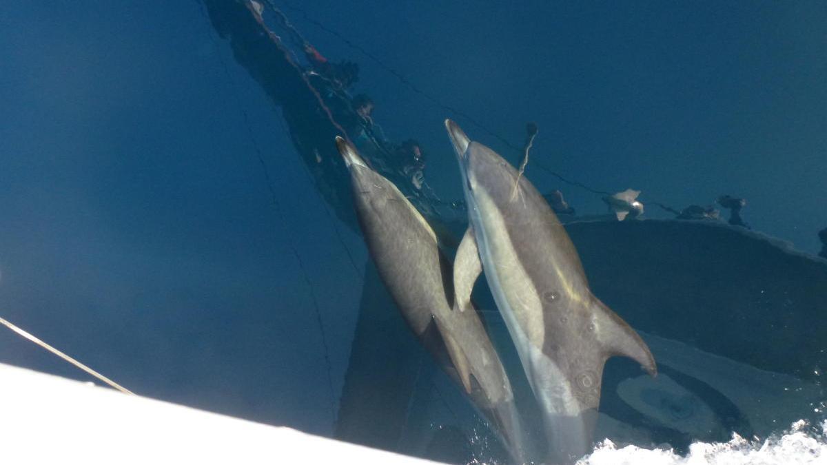 La fauna marina del Mediterráneo, al alcance de todos