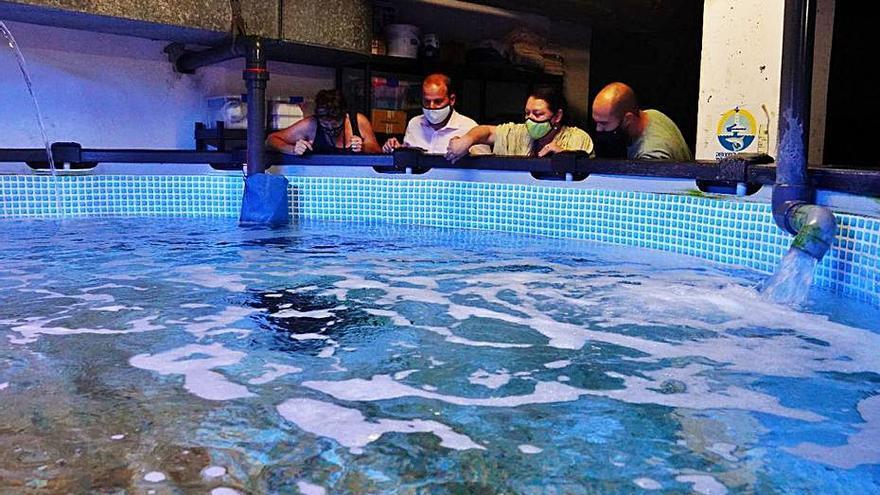 Proyecto piloto para la conservación de pequeños tiburones en Palma Aquarium